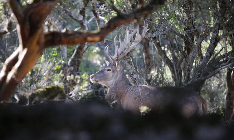 ogliastra-cervo-sardo